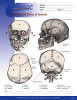 Your Cranial Bones & Sutures