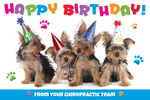 Happy Birthday - from your chiropractic team. (party dogs)