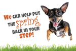 We can help put the spring back in your step! (terrier)